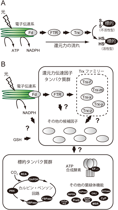 生化学							SEIKAGAKUJournal of Japanese Biochemical Society
