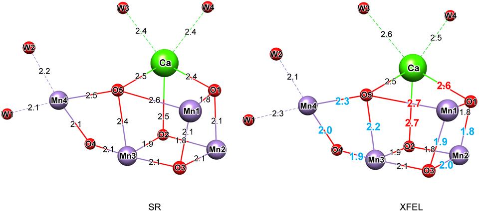 光合成水分解・酸素発生反応の構...