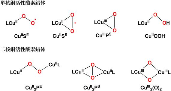 チロシン N-モノオキシゲナーゼ